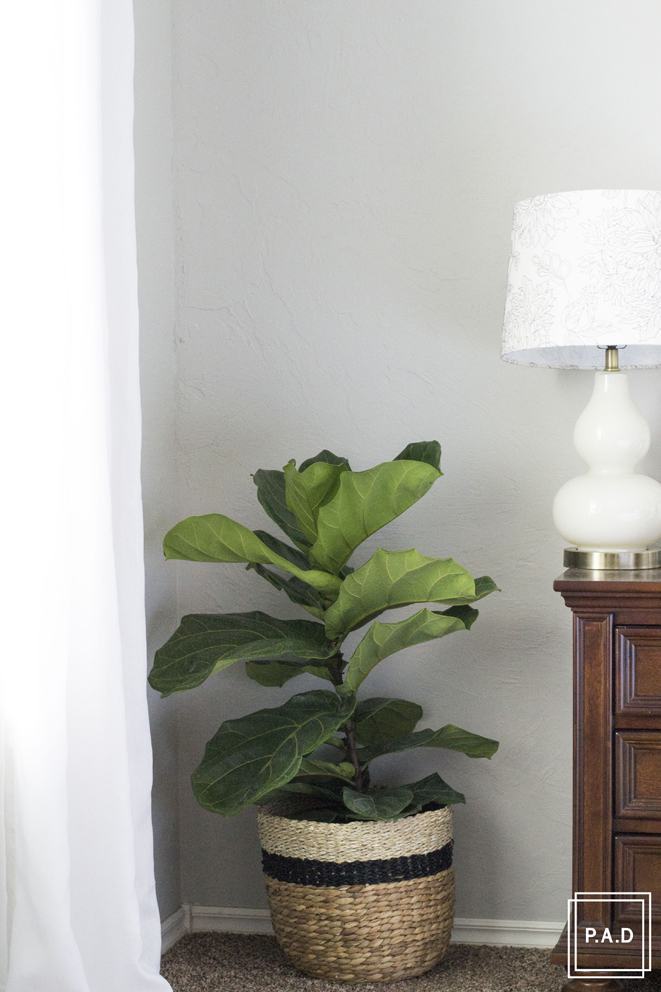 Project-allen-designs-how-to-keep-a-fiddle-leaf-fig-alive